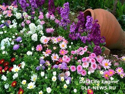 Разнообразие цветников