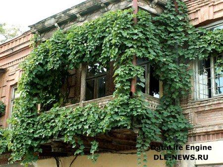 Возможности по озеленению балконов