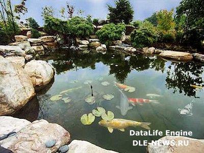 Водные сады: больше чем просто пруд