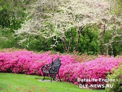 Монохромные сады: творчество в одном цвете