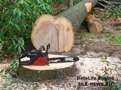 Самостоятельный спил деревьев: какие правила следует знать