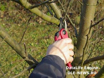 Срезаем деревья