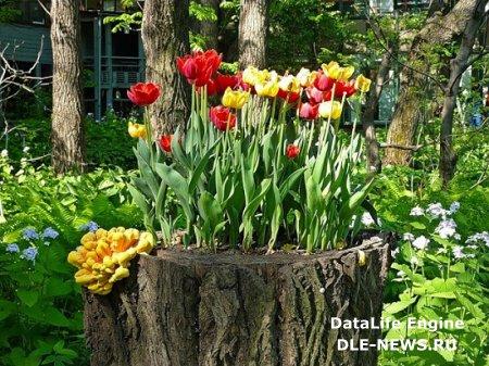 Три способа украсить старые пни в саду