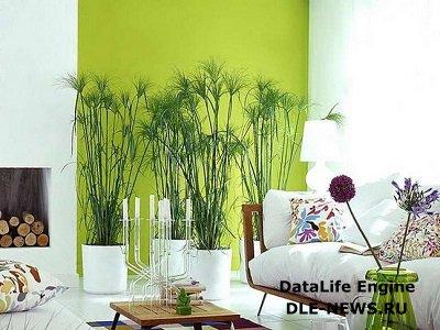 Выбор места для домашних растений в гостиной