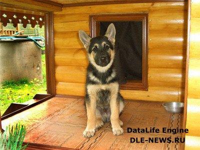 Собачья будка на даче