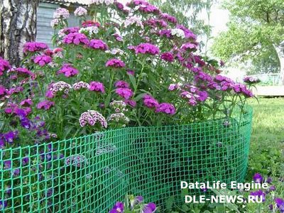Выращиваем садовую ограду