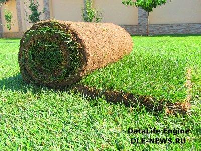 Где, как и почему стоит купить рулонный газон?